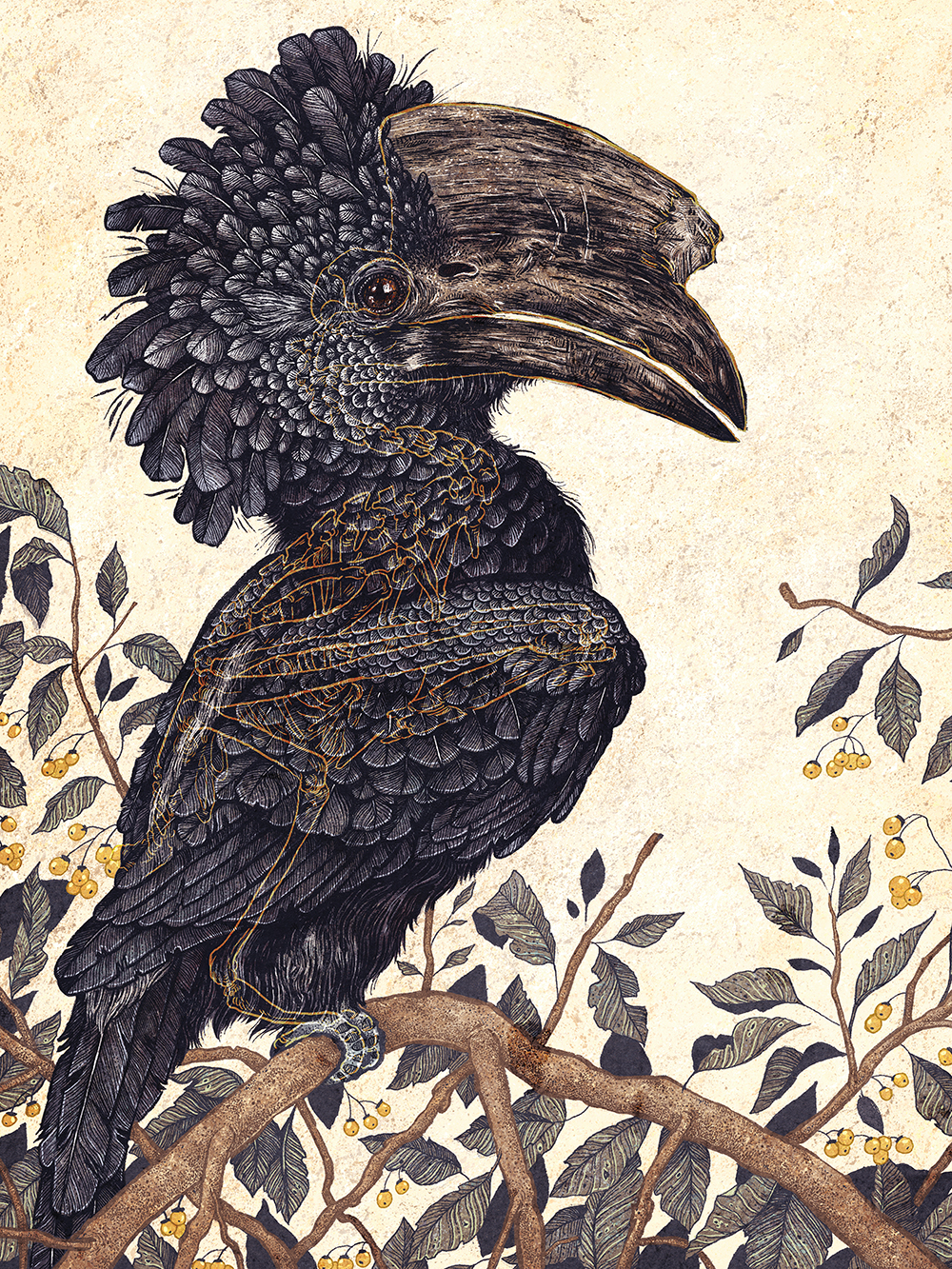 """Silvery Cheeked Hornbill"" by Angela Rizza"