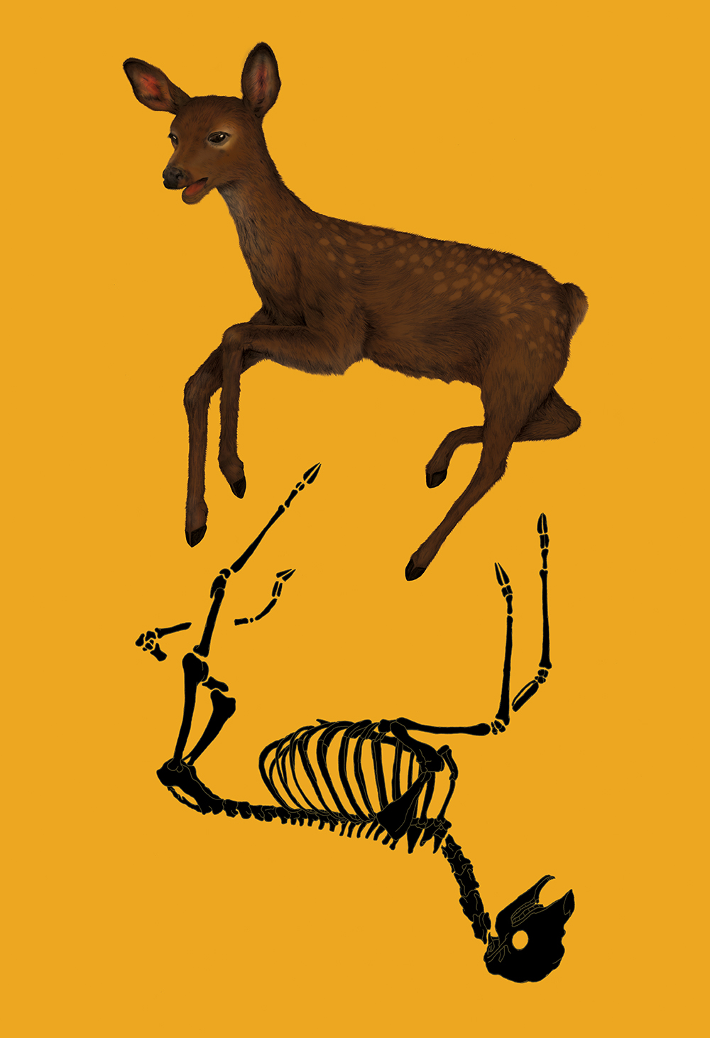 """""""Reincarnate"""" by Rachel Frankel"""