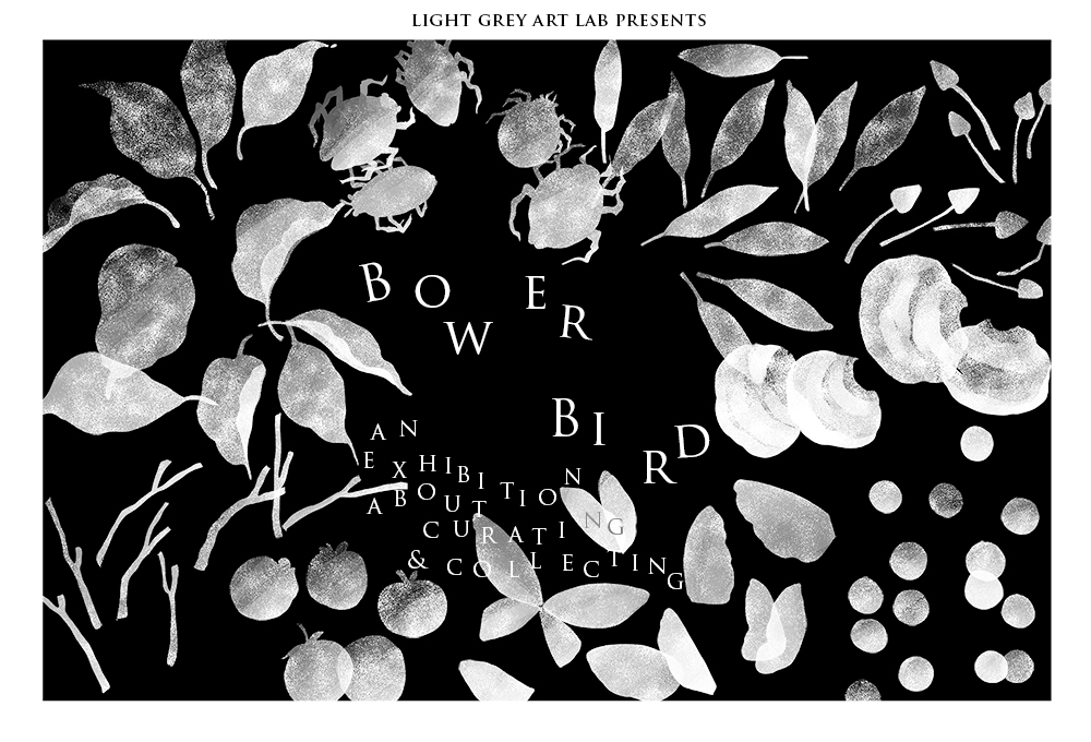 Our December Show -- Call for artists! Bower Bird: an exhibition about curating & collecting