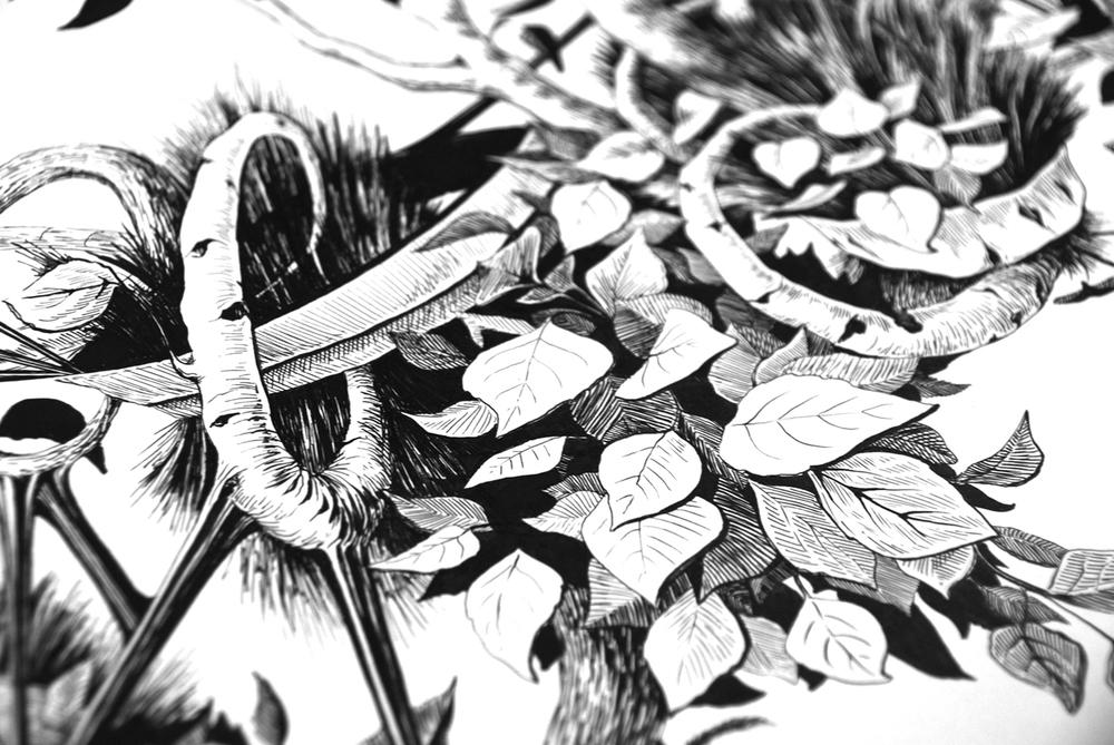 Botanica_Previte_Web_Promo2.jpg