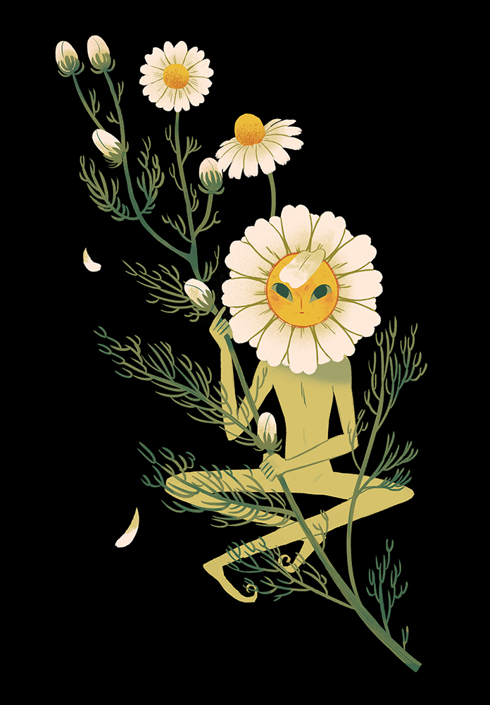 """Chamomile"" by Sara Kipin"
