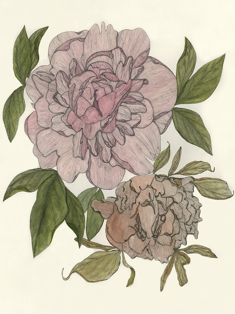 """Life and Death of a Peony"" by Priya Bansal"