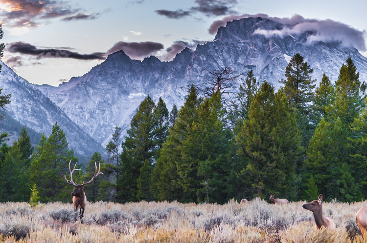 A huge variety of wildlife stroll through Grand Teton's boundaries