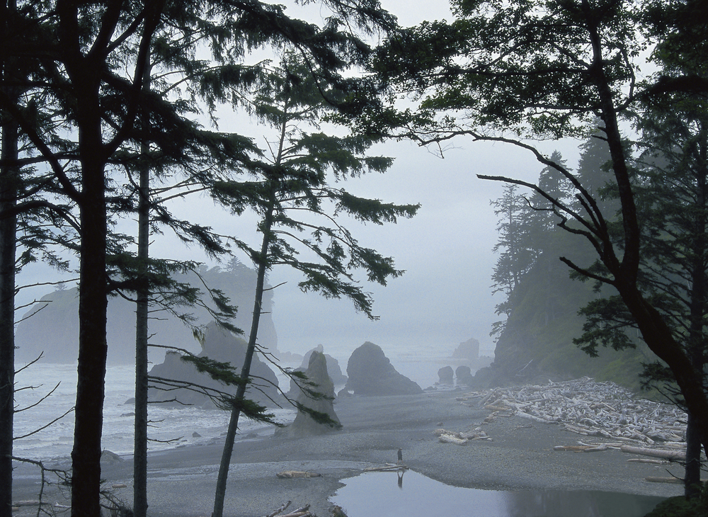 Misty rock formations along the coast
