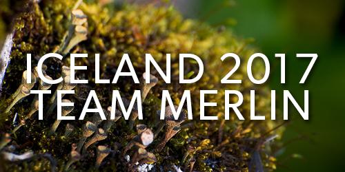 Iceland-2017-Team-Merlin-Button.jpg