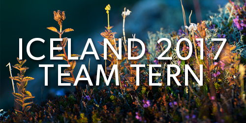 Iceland-2017-Team-Tern-Button.jpg