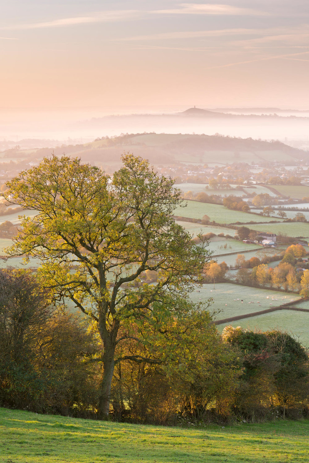 The misty morning view of Glastonbury with the legendary Tor in the distance.