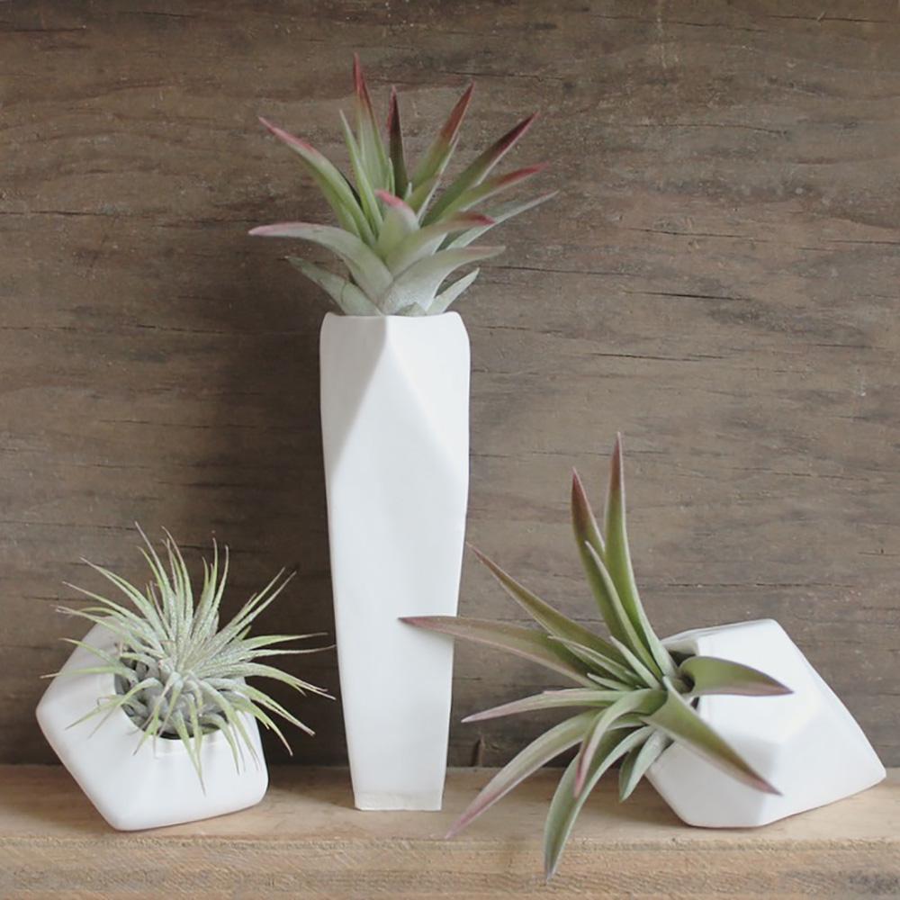 """Small Faceted Air Plant Gems"" – Janelle Gramling"