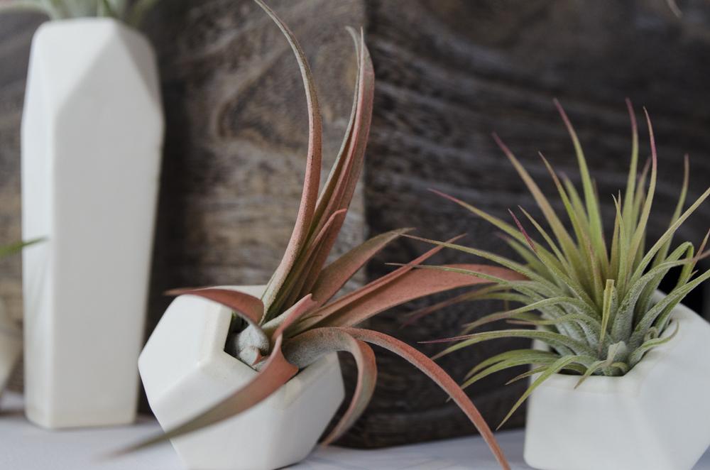 small+planter_detail.jpg