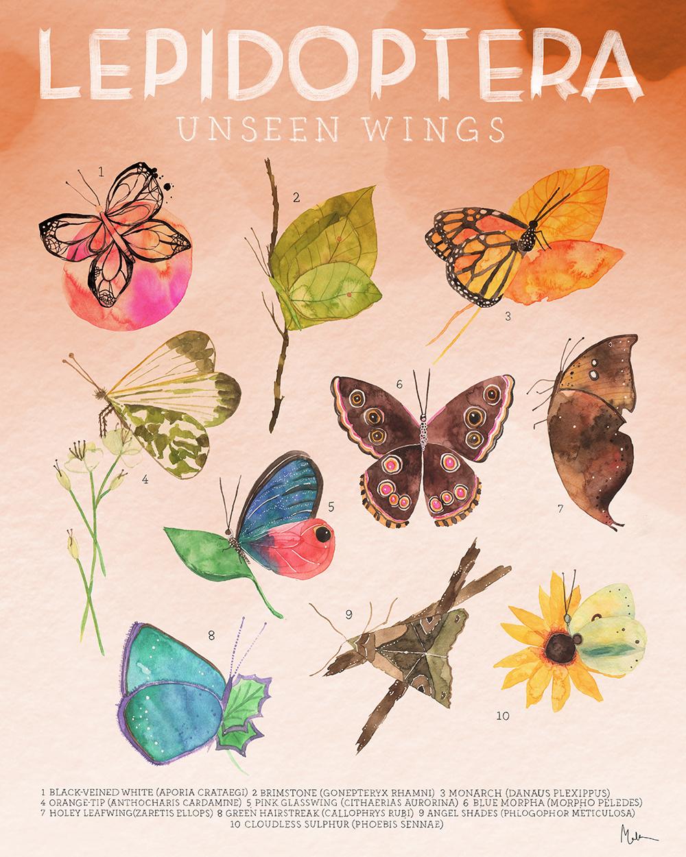 """""""LEPIDOPTERA: Unseen Wings"""" by Meera Lee Patel"""