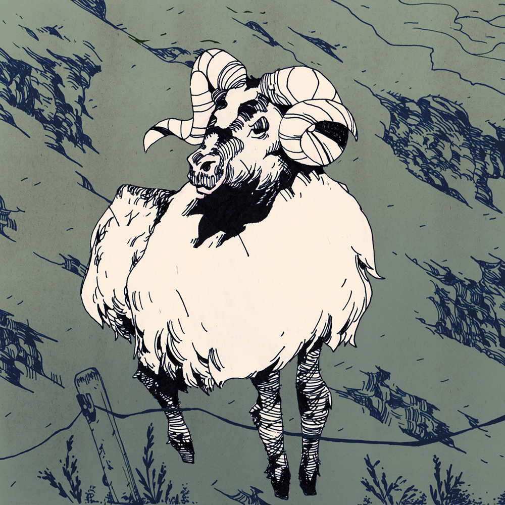 """Sheep of Hills"" by Evan Monteiro"