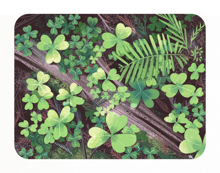 woodsorrel-1.jpg