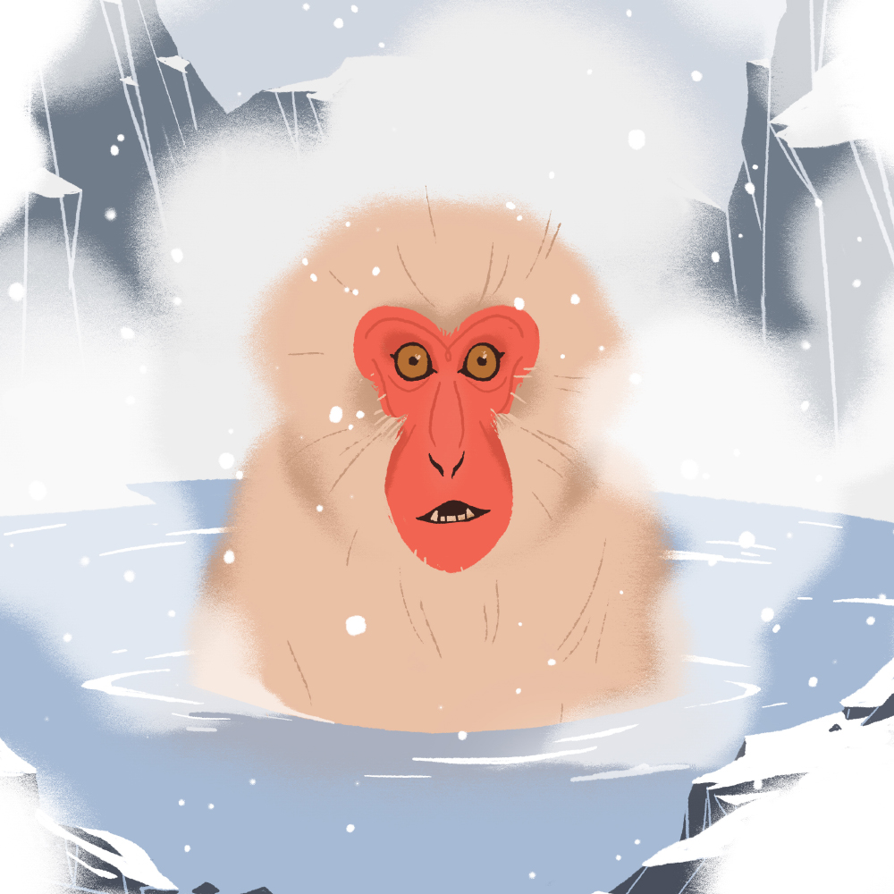 JapaneseMacaque.jpg