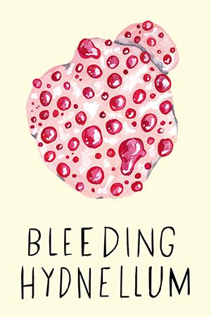 bleeding hydnellum.jpg