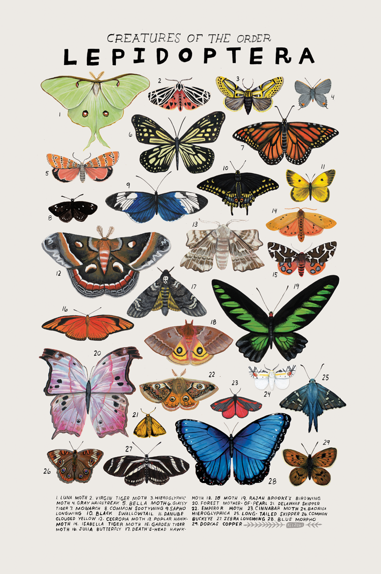lepidoptera.png