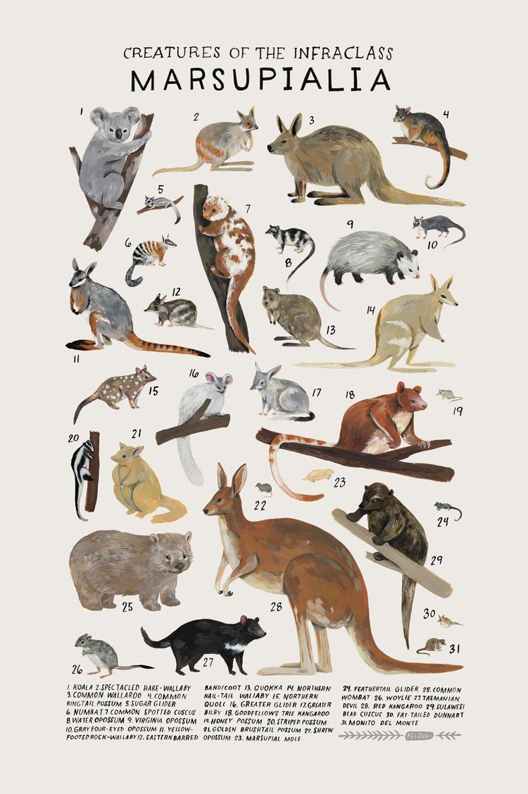 marsupialia.png