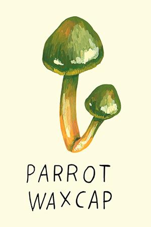 parrot waxcap.jpg