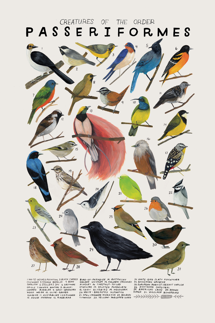 passeriformes.png