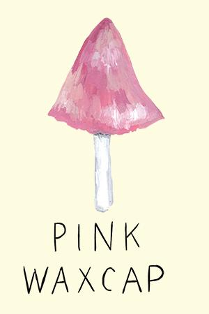 pink waxcap.jpg