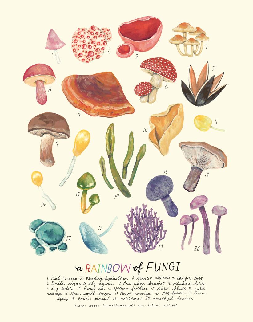 rainbow of fungi.png