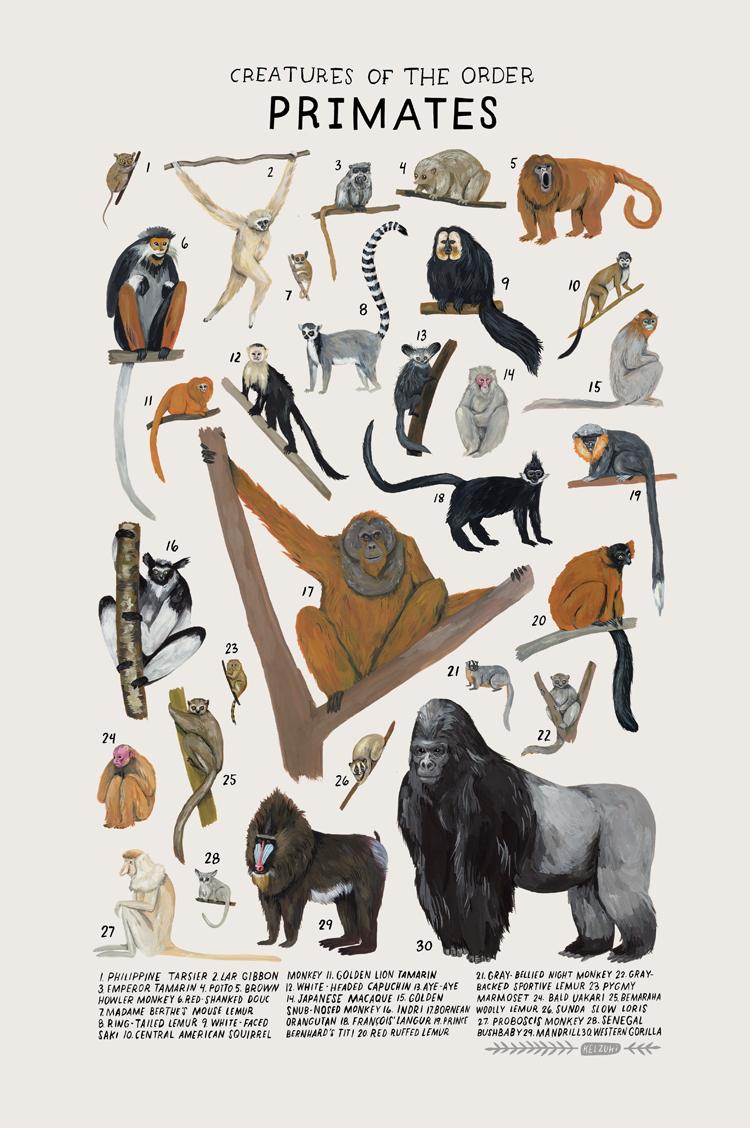 primates.png