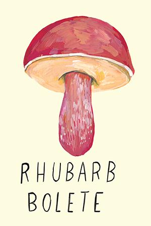 rhubarb bolete.jpg
