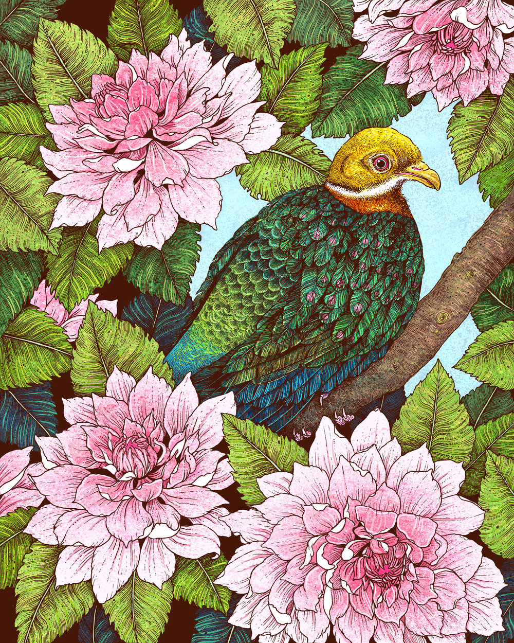 """Whistling Fruit Dove In Spring"""