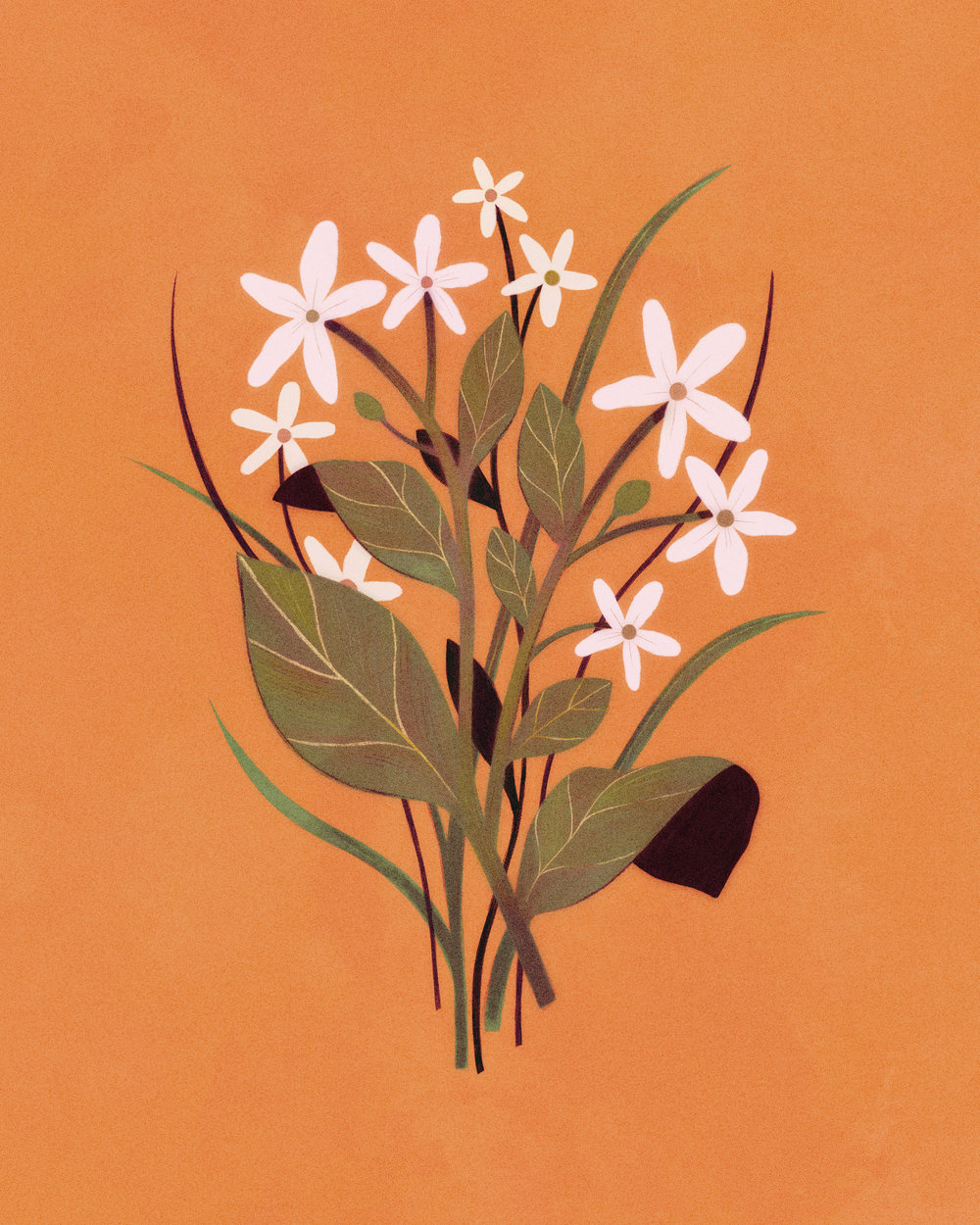 """Scent: Jasmine Flowers"""