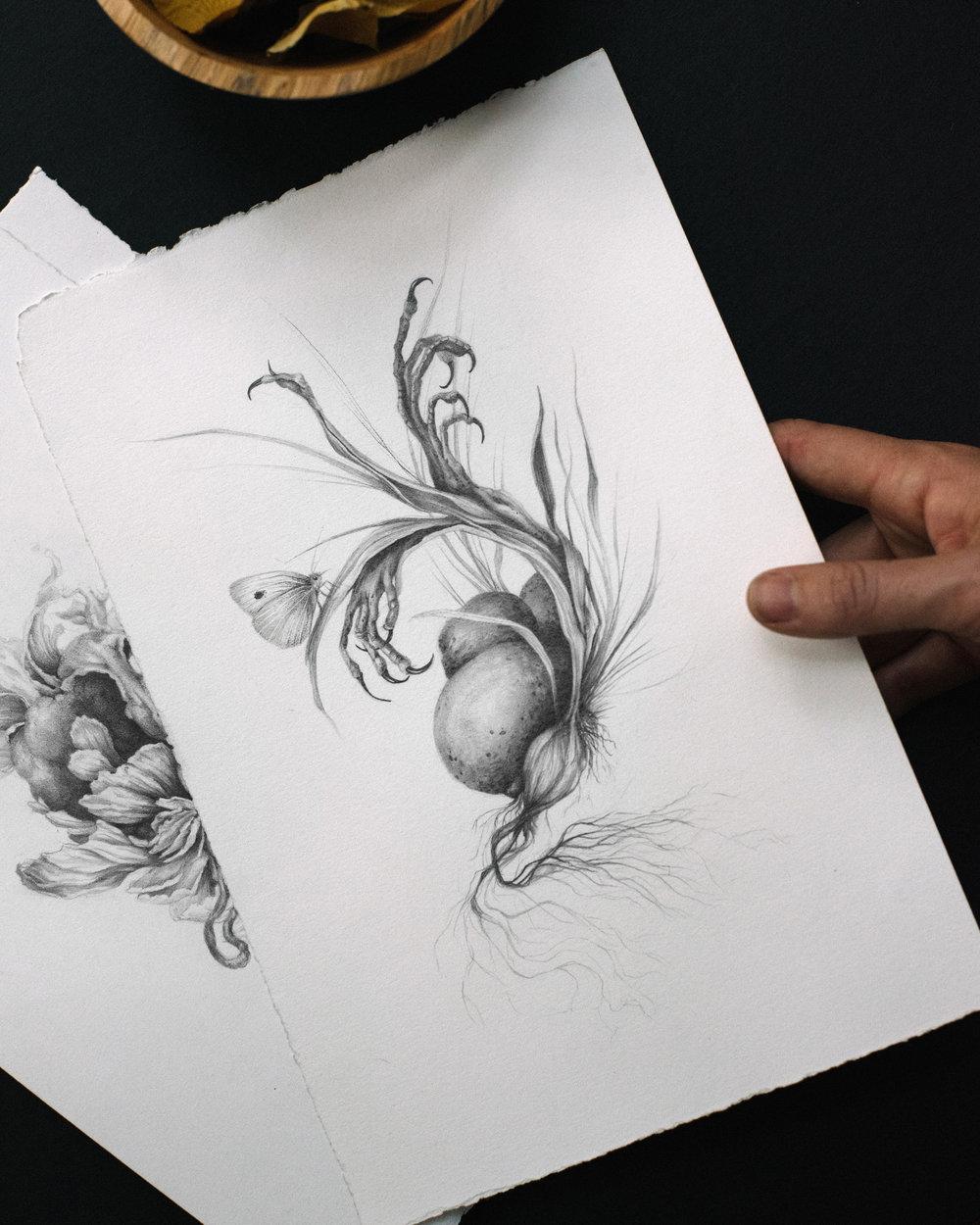 Cabbage Moth detail