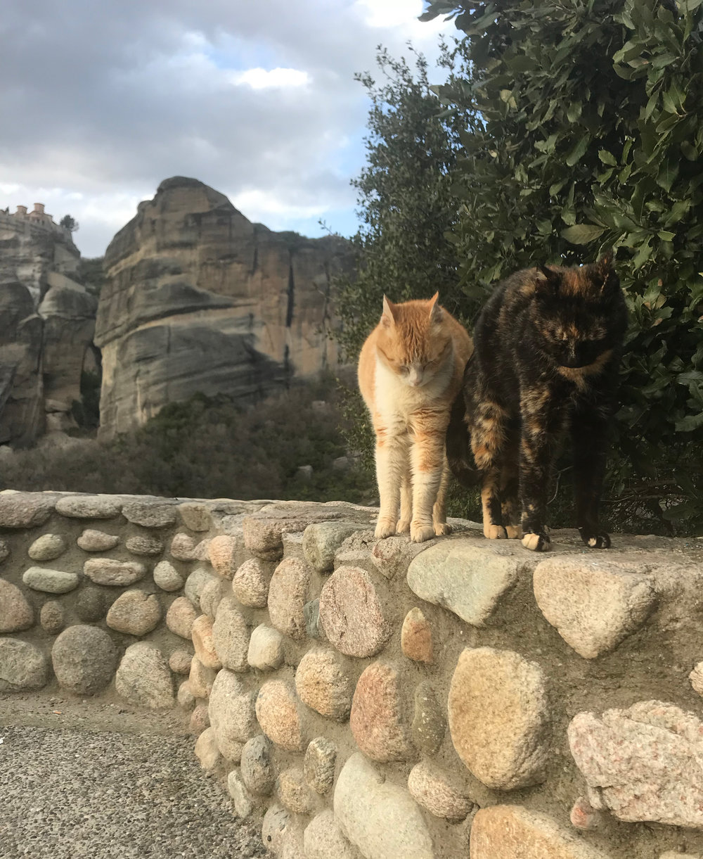 Friendly cats on the mountaintop at Meteora