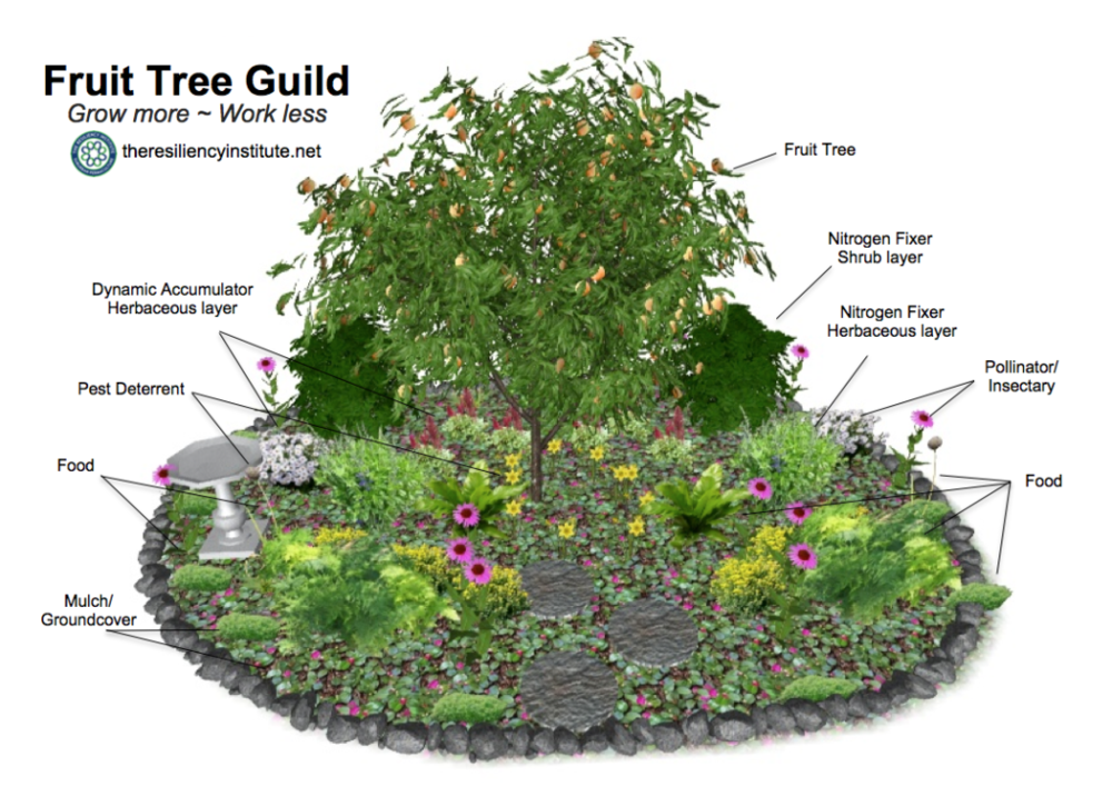 Fruit_Tree_-Guild_labeled1-1024x724.png