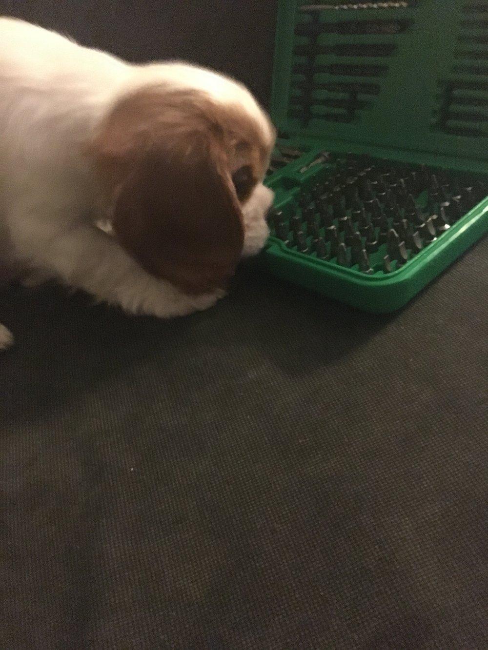 DIY Puppy