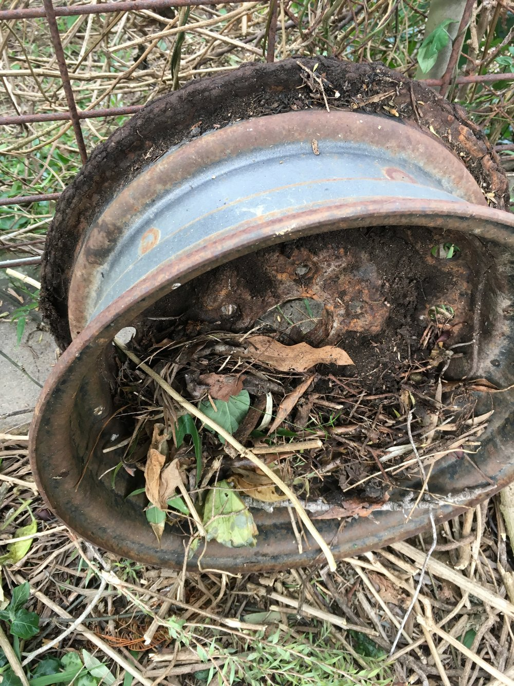 Same wheel rim