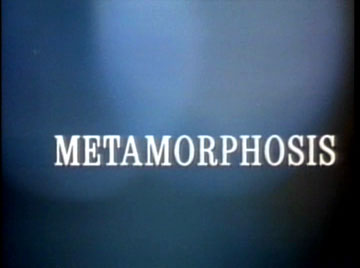 I never metamorph I didn't like.