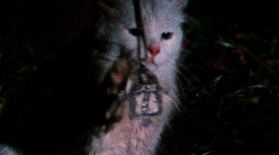 Psychic Kitten, run run run run run run run awaaaay...