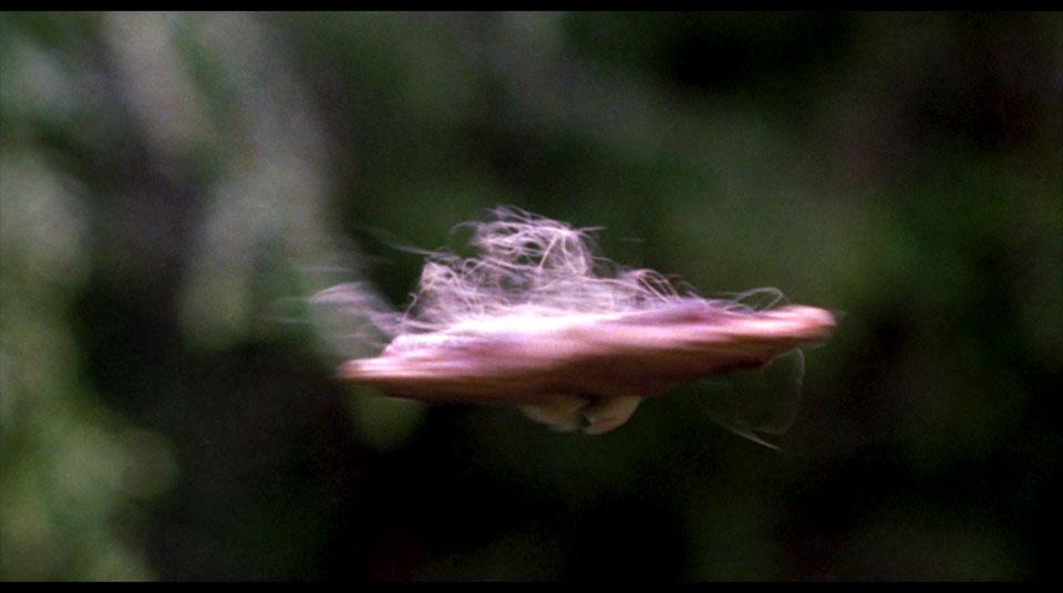 UFO - Unidentified Fleshy Object