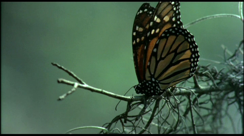 …because NOBODY suspects the butterfly!