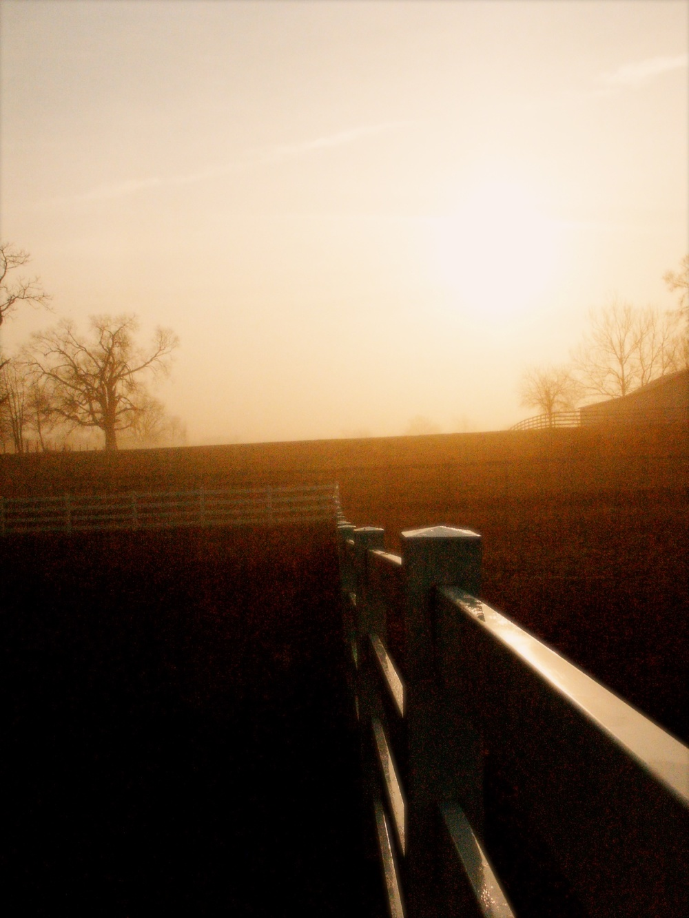 Grainy Fence, March 2003