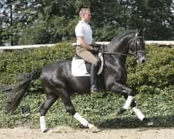 Johannes Westendarp & Greystoke