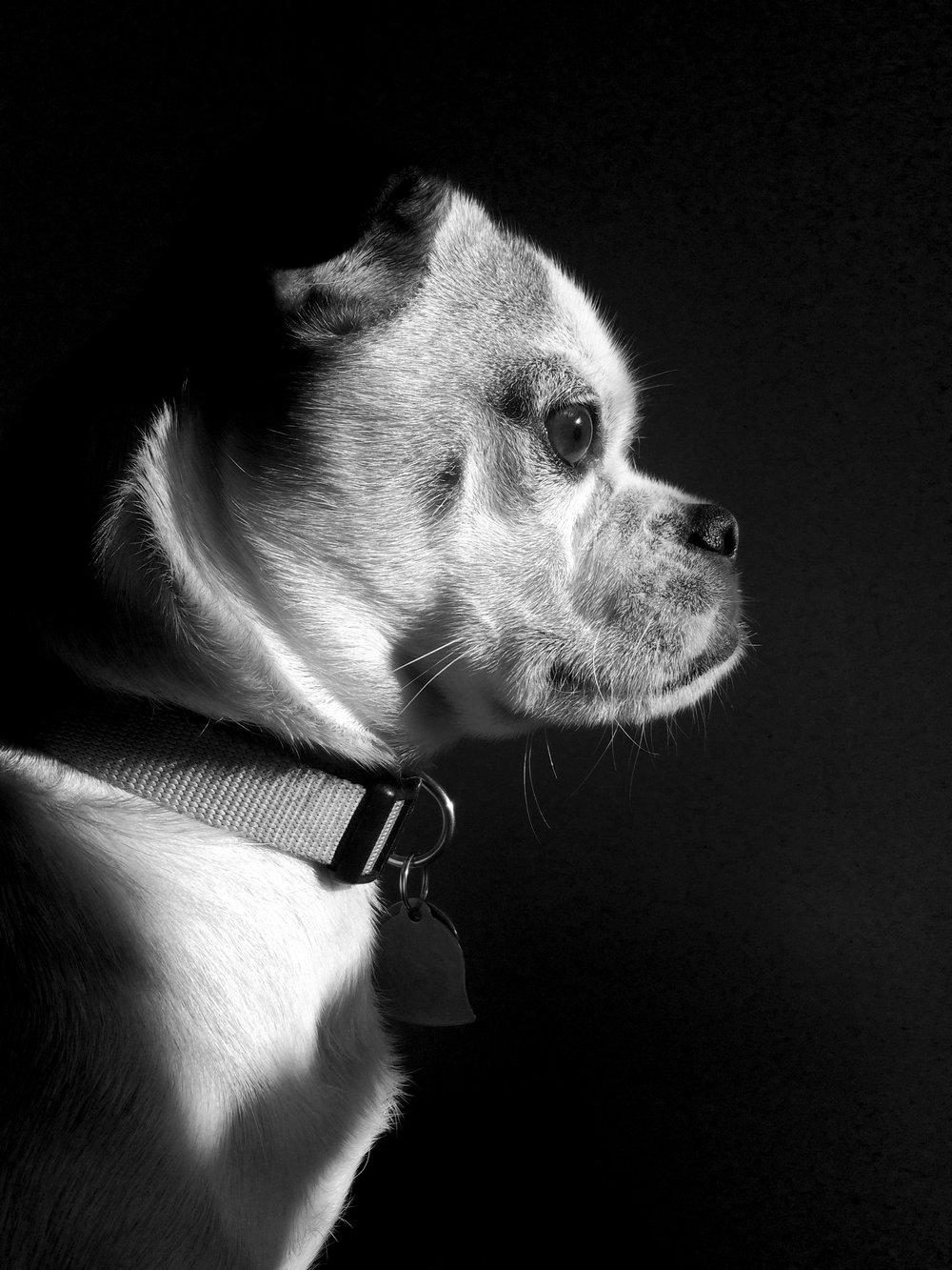 Louie-BW.jpg