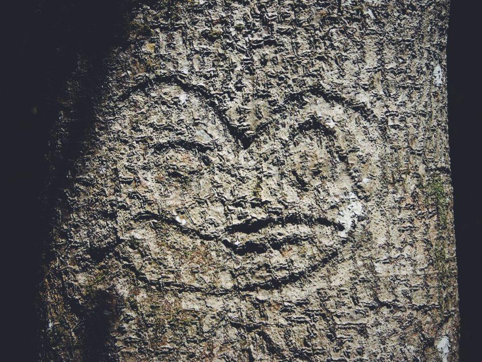 Przykład sztuki Moriori – rzeźba zrobiona na pniu drzewa. Foto:  T Reid , użyte, zmodyfikowane i udostępnione na licencji  CC BY-SA 3.0 .