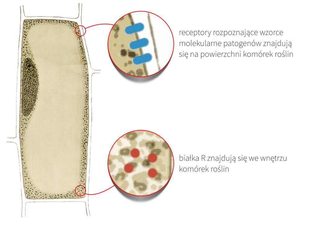 komórka-roslina.jpg