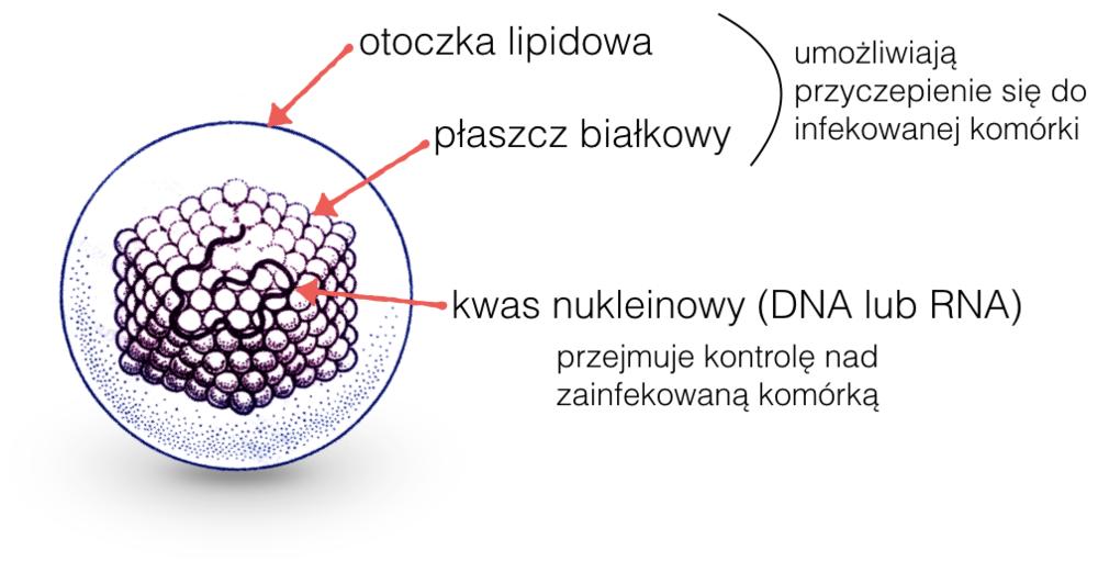 Typowy wirus.