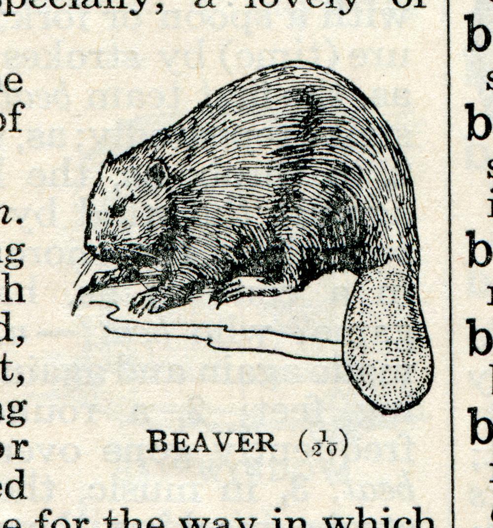 dictionary_beaver.jpg