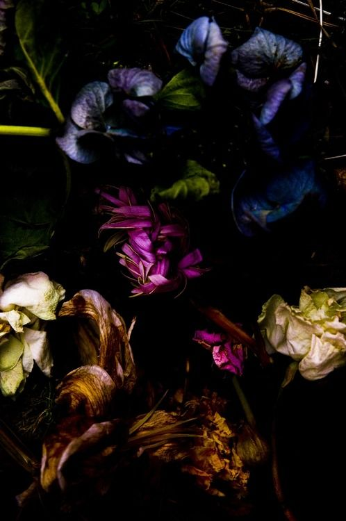 Blooms on Black vibes- Photo by  Takashi Mori
