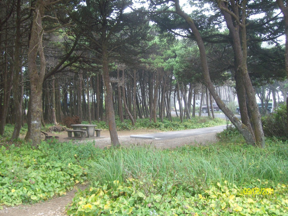 Tillicum Beach Campground, Siuslaw NF, OR