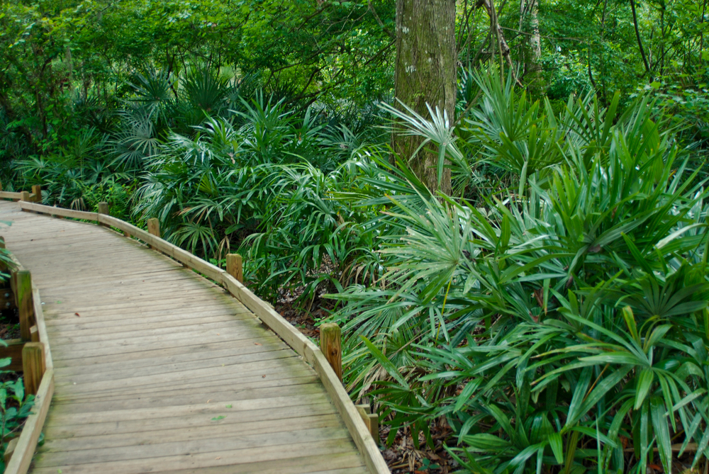 Boardwalk makes easy walking on Bear Swamp Trail