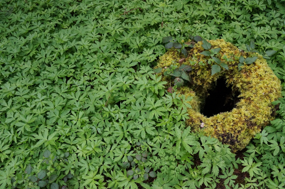 Lush Groundcover