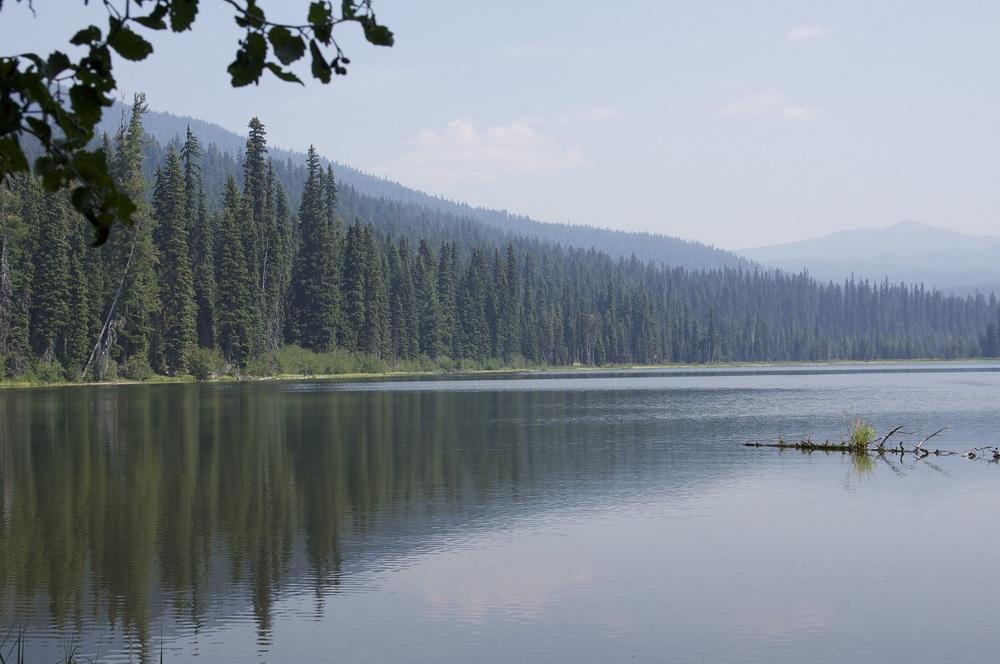 American land leisure oregon job oakridge gold lake for Oregon fish and wildlife jobs