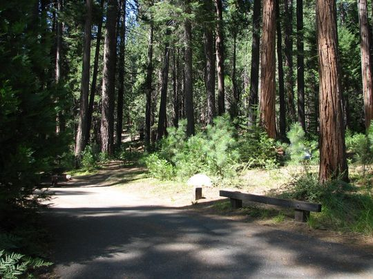 Paved road through Dimond O Campground